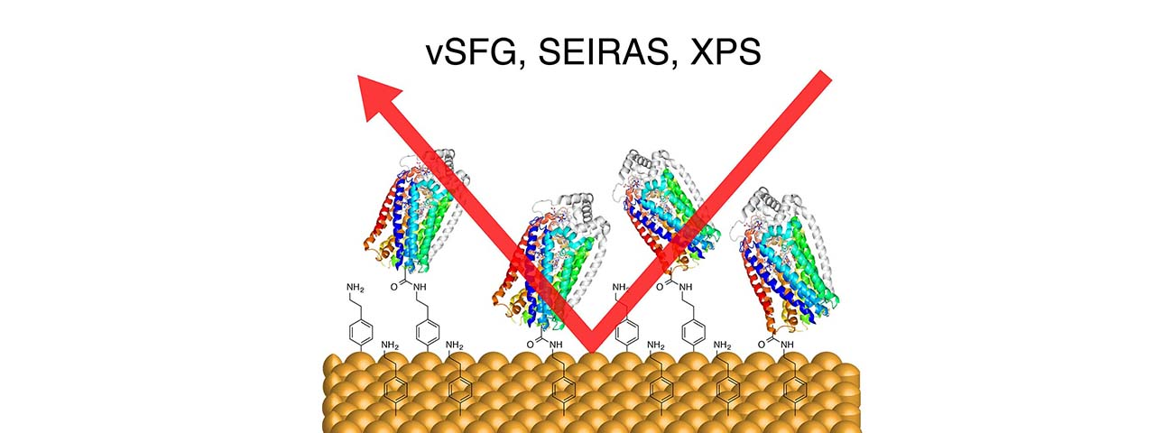 NOR-modified Electrode
